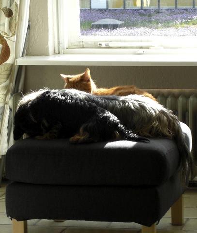 A Truce for Sun