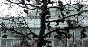shoetree.jpg