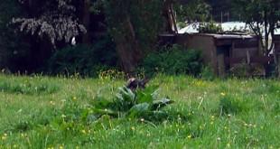 pixgrass.jpg