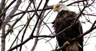 eaglefeat