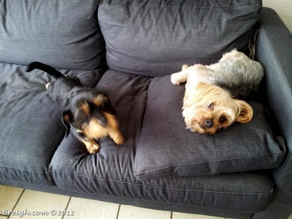 Pixel & Bailey