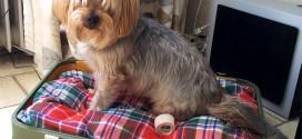 Pinterest Crafts: Old Suitcase Turned Dog Bed!